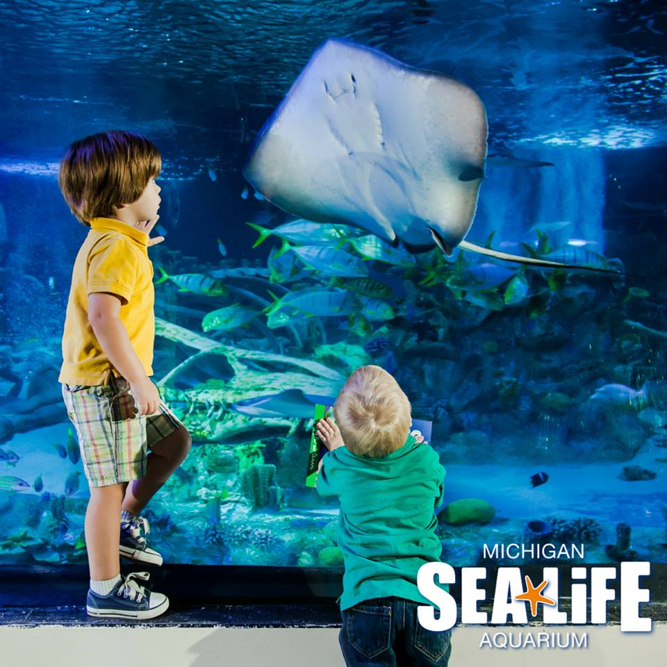 Toddler Time At Sea Life Michigan Aquarium Kids Out And